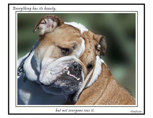 Bulldog Beauty Poster