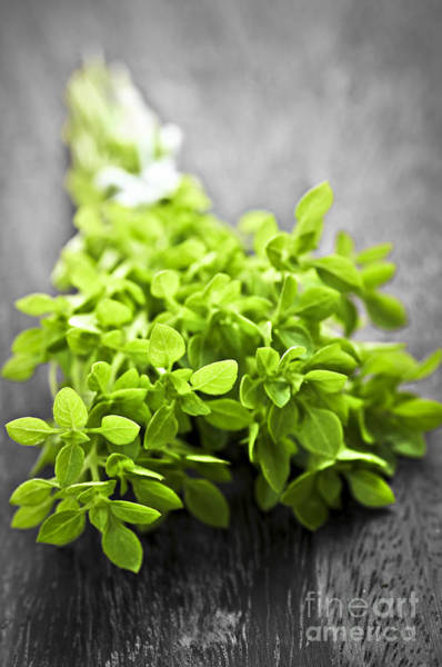 Bunch Of Fresh Oregano Poster