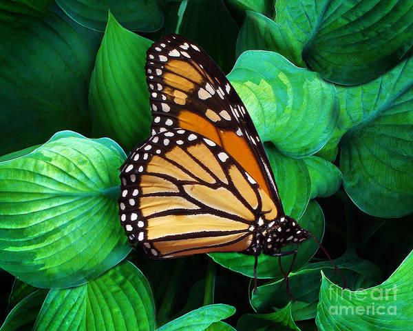 Butterfly Be Still Poster