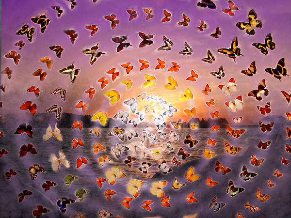 Butterfly Sunset Poster