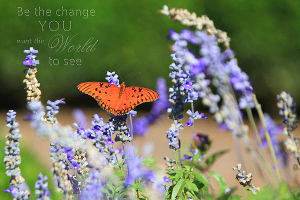 Butterfly With Message Poster