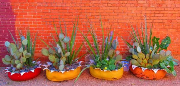 Cacti Quartet Poster