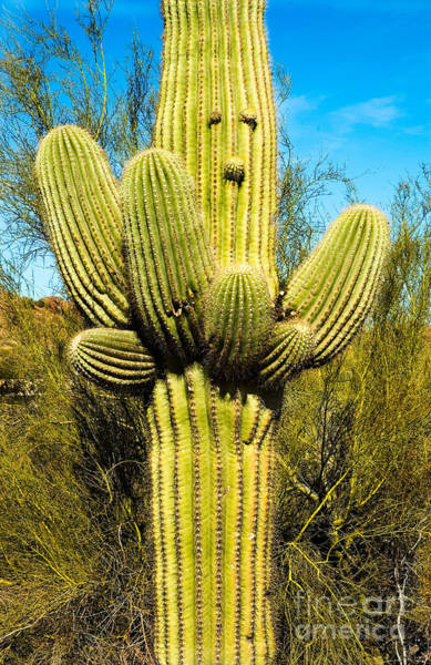 Poster featuring the photograph Cactus Face by Mae Wertz
