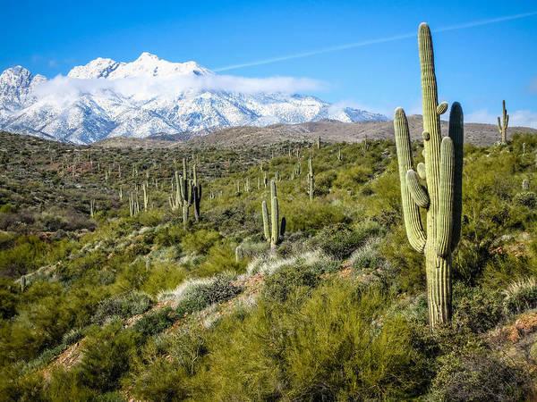 Cactus In Arizona Poster