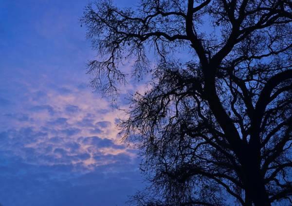 California Oak Sunrise Poster