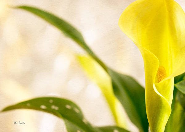 Calla Lily Two Poster