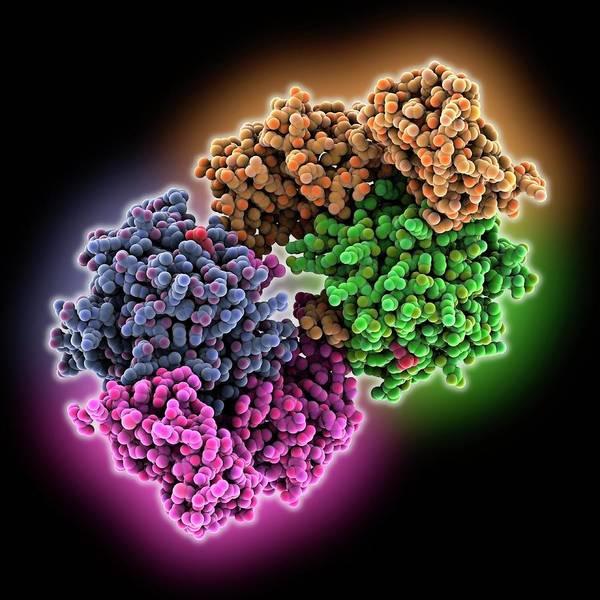 Camp-dependent Protein Kinase Molecule Poster