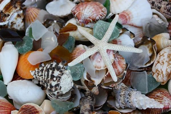 Caribbean Shells Poster