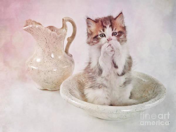 Cat Bath II Poster