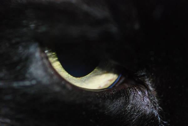 Cat Eye Poster