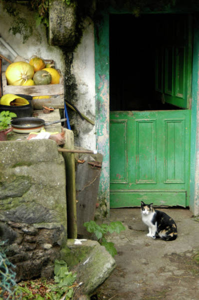 Cat In The Backyard Of A Village House Poster