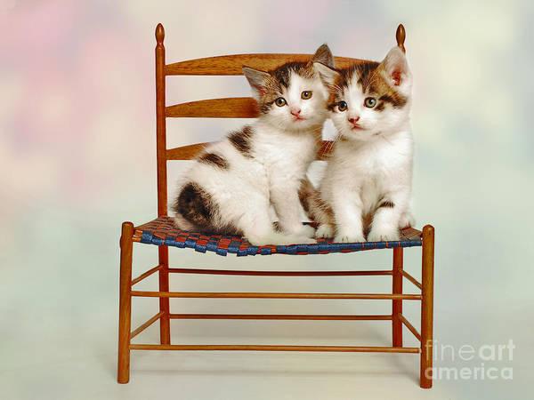Cat Pals Poster