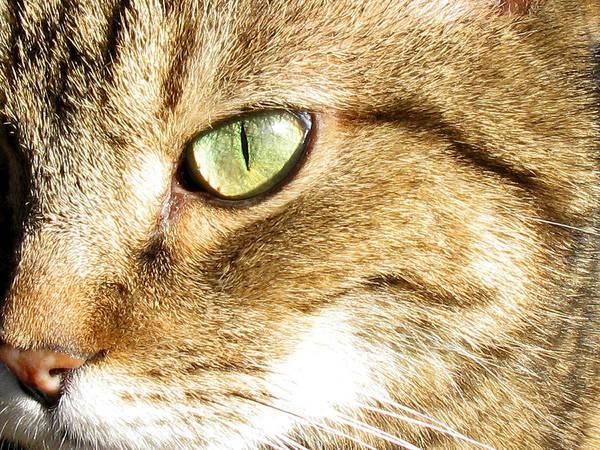 Cat Portrait 2 Poster
