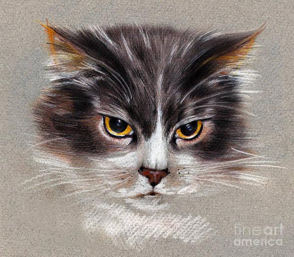 Cat Portrait Yellow Eyes Poster