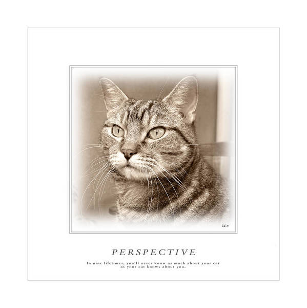 Cat Reflections 1 Poster