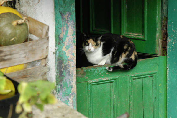 Cat Resting On A Door In Corme Poster
