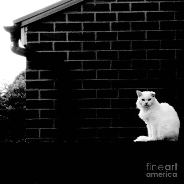 Cat With The Floppy Ear In Black And White Poster