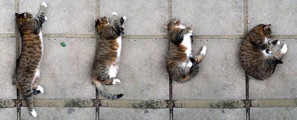 Cat's Life 3 Poster
