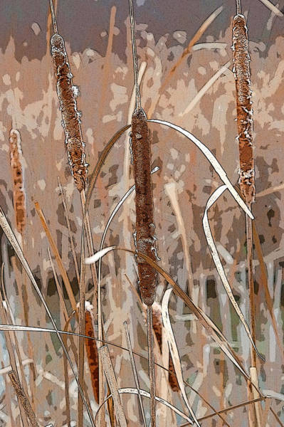 Cattails In The Fall Poster