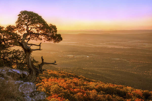Cedar Tree Atop Mt. Magazine - Arkansas - Autumn Poster
