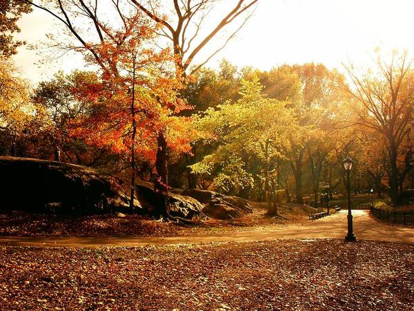 Central Park Autumn Trees In Sunlight Poster