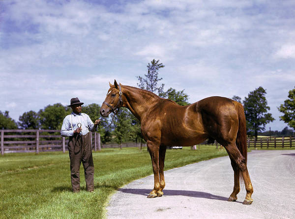 Champion Horse Man-o-war Poses With One Poster