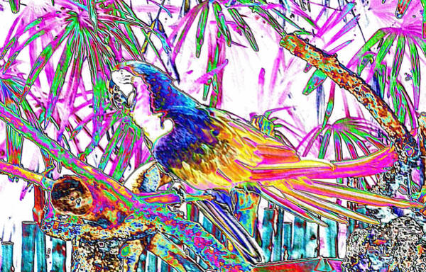 Cheerful Parrot. Colorful Art Collection. Promotion - August 2015 Poster