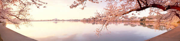 Cherry Blossoms At The Lakeside Poster
