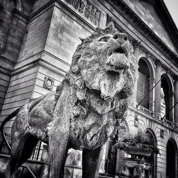 Lion Statue At Art Institute Of Chicago Poster