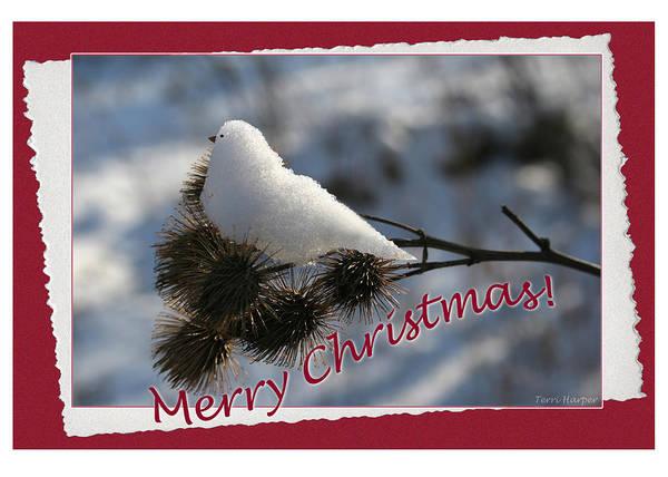 Christmas Snow Bird Poster
