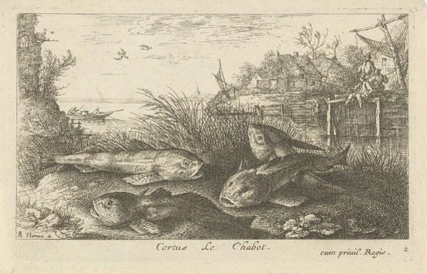 Chub, Squalius Cephalus On A Riverbank, Print Maker Albert Poster