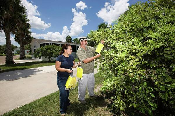 Citrus Greening Disease Research Poster