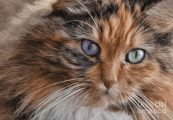 Cloe Kitty Poster