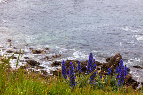 Coastal Cliff Flowers Poster