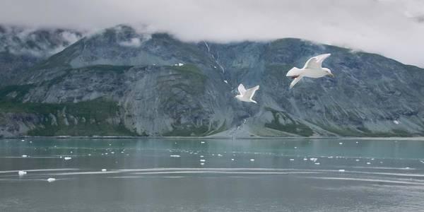 Colors Of Alaska - Glacier Bay Poster