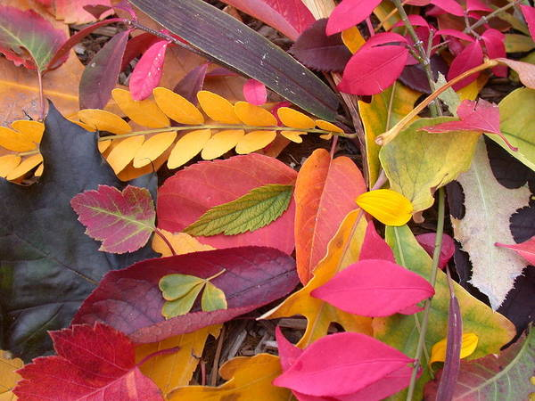 Poster featuring the photograph Colors Of Autumn by Shane Bechler