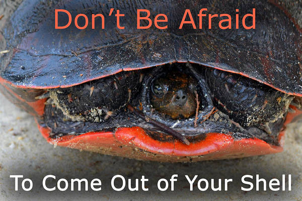 Come Out Of Your Shell Poster