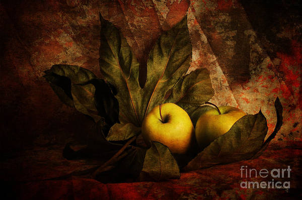 Comfy Apples Poster