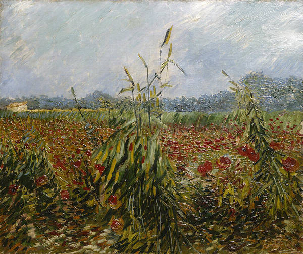Corn Fields And Poppies, 1888 Poster