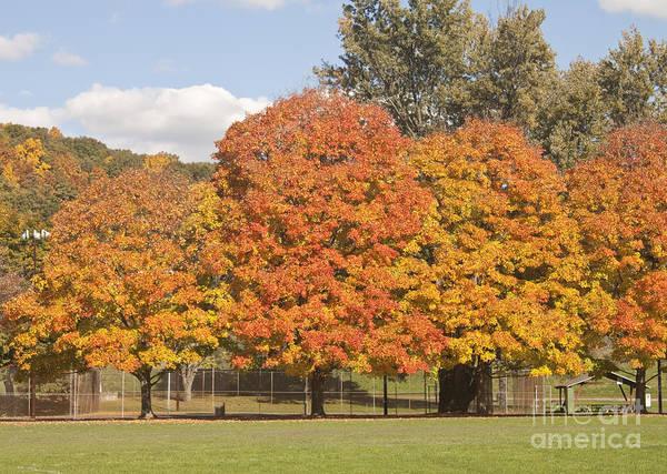 Corning Fall Foliage 1 Poster