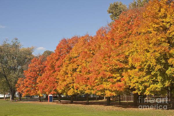 Corning Fall Foliage 3 Poster