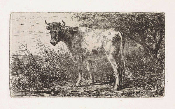 Cow On The Bank Of A River, Jan Vrolijk Poster