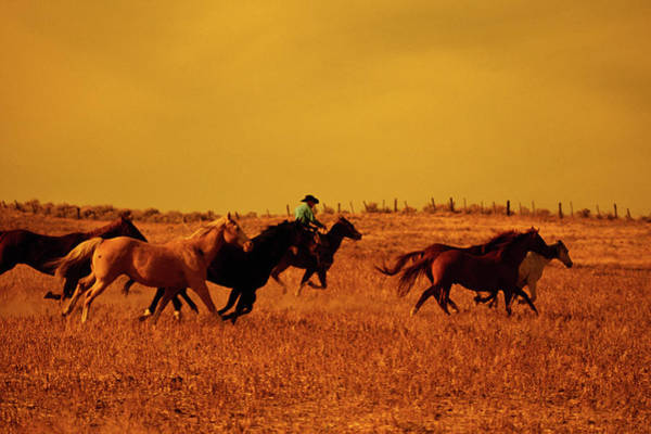 Cowboy Herding Running Horses, Oregon Poster