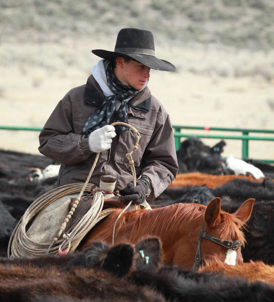 Cowboy Signature 9 Poster