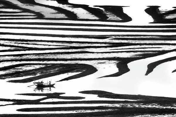 Cruising On A Zebra Poster