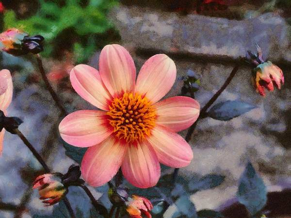 Poster featuring the digital art Dahlia First Love by Paul Gulliver