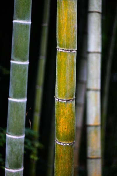 Dark Bamboo Poster