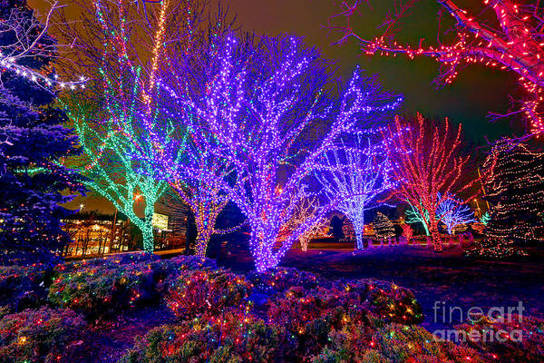 Dazzling Christmas Lights Poster