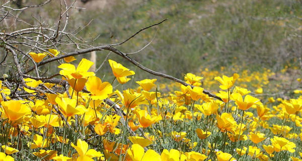 Desert Wild Flowers Poster