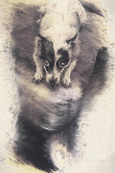 Digital Artwork Of A Mini Fox Terrier Dog Poster